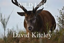 Wild Life - Nature Photography book