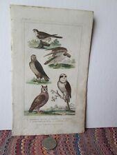 Vintage Print,HAWKS,Animated Nature,Goldsmith,1822