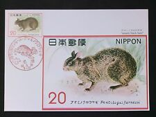 JAPAN MK FAUNA TIERE ANIMALS AMAMI BLACK HARE MAXIMUM CARD MC CM d1722