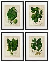 Vintage Botanical Floral No. 05 Art Home Wall Art Print Set of 4 Prints UNFRAMED
