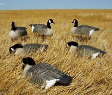 Avery Greenhead Gear GHG Canada Goose Shell Decoys 6 NEW!