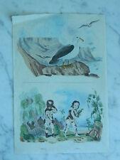 ancienne Gravure originale 19e Albatros ALBINOS Pl.9 Guérin