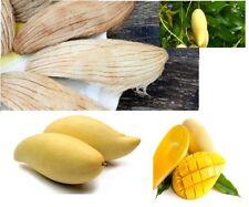 Thai Gold Mango Seeds Namdokmai Sithong, Seeds For Planting