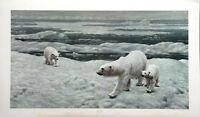 Charles Frace- Polar Bear- S/N- Limited Edition