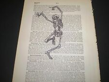 1893 ORIGINAL DICTIONARY BOOK PAGE WITH VINTAGE ARTWORK OF A DANCING SKELETON