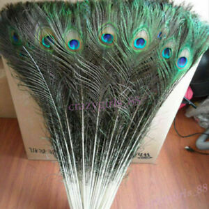 10Pcs Real Natural Peacock Tail Feathers 10-12inch Home Room Decor DIY Craft