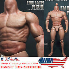 "12"" ZC Toys Male Action Figure Muscular Body F/ 1/6  HT Man Head Model USA Stock"