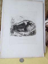 Vintage Print,HIPPOPOTAMUS,1831,Animals,Landseer