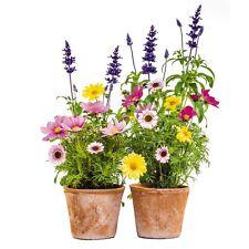 Fenstersticker Blumen 2 Teile