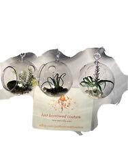 3X Clear Hanging Plastic Ball Bottle Terrarium Flower Planter Pot Home Decor