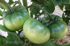 10 graines de tomate Tasmanian Chocolate Dwarf Tomato Project seeds méth.bio