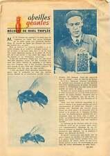 Beekeeper Bees Honey Harvest Abeilles Récolte du Miel Sweden 1953 ILLUSTRATION