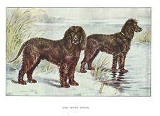1930 Art Francois Castellan France Dog Watercolor Print Irish Water Spaniel