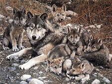 Wolf With Cubs Men Sweatshirt S M L XL 2XL 3XL