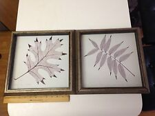 Two 11x11 Framed Black Oak And  Pistacia Chinemsis Leaves Painting