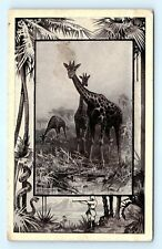 Postcard The Giraffe Safari 1909 Mintz K11