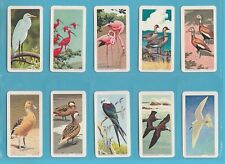 BIRDS - BROOKE BOND CANADA - SCARCE SET OF 48  TROPICAL  BIRDS  -  1964