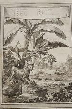 GRAVURE AFRIQUE CROCODILE POR EPIC AIGLE CAMELEON PANTHERE  BOMBA 1747