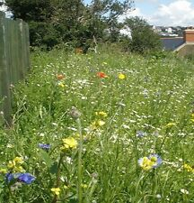 COASTAL AREAS WILDFLOWERS & GRASS SEED MEADOW MIX 1kg