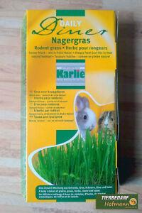 Nagergras,Naturgras,Cat Grass,Grass for Rodents,Nutritional Supplement Karlie