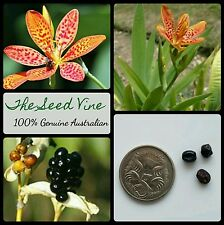 20+ BLACKBERRY LILY SEEDS (Iris domestica) Leopard Flower Medicinal Ornamental