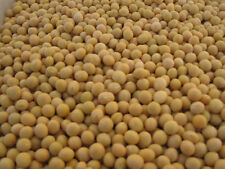 25 lb Certified Organic Non-GMO Soybeans (Newest Crop)