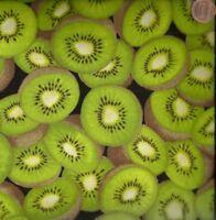 Kiwi fruit green food kitchen Timeless Treasures  fabric
