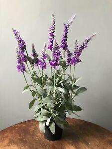Realistic Potted Artificial Veronica, Faux Silk Purple Lavender Wild Flowers