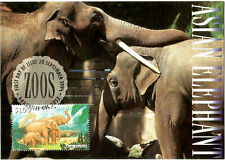 Asian Elephants Australian Zoos Maximum Card Postmarked on First Day of Issue