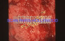 LITTLE ANGELS JAM 90s DIAPOSITIVE DE PRESSE ORIGINAL VINTAGE SLIDE #1