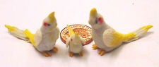 1:12 Scale 2 Parents & A Baby Grey Cockatoo Dolls House Miniature Exotic Bird C3