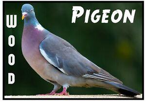 Pigeon Bois - Nouveauté Souvenir Réfrigérateur Aimant - Oiseaux Du Monde /Neuf/