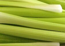 Celery Golden Pascal 3,000 Seeds Heirloom Vegetable