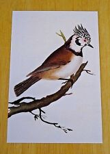 BRITISH LIBRARY BIRD POSTCARD ~ CRESTED TITMOUSE BY EDWARD DONOVAN,1794-1819