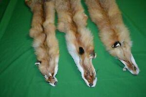 3 PC Skin Real European Fox Fur Hides Pelts Tanned Taxidermy
