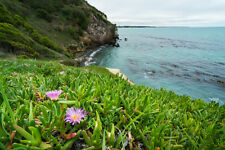 tropische Blüten Pflanze exotische seltene Sämereien Saatgut KARKALLA Exot rar.