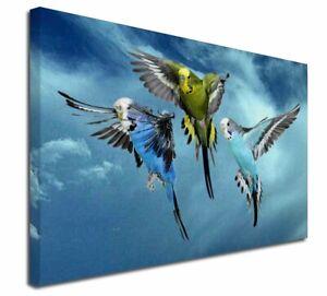 """Budgies in Flight X-Large 30""""x20"""" Canvas Wall Art Print, AB-96-C3020"""