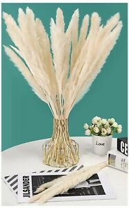 30 Pcs Dried Small Pampas Grass Fluffy, 45CM Natural Reeds Plumes, White