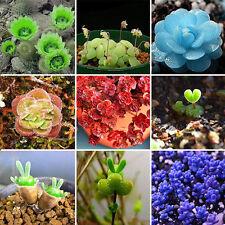 120Pcs Rare Mix Lithops Seeds Living Stones Succulent Cactus Bulk Seed Pot Decor