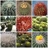 20 semi in miscuglio di Echinocactus mix ,piante grasse,seed cactus mix