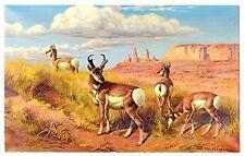 "Pronghorn Antelope Oversize Postcard Large 5.5"" x 8.75"" Western North America"