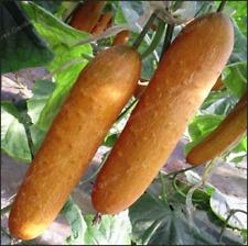 20 Pcs Seeds Cucumber Bonsai Japanese Vegetable Home Garden Planting New 2019 R