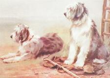 Old English Sheepdog Print On Guard W Tuker Reproduction As Is