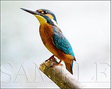 Photograph of Bird On Branch 8X10 New Fine Art Color Print Picture Birds Nature