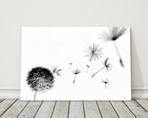 abstract dandelion white background black flying canvas picture print