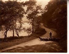OS075.Vintage Judges Card. Nr. Stybarrow Crag. Ullswater. Sheep on the road