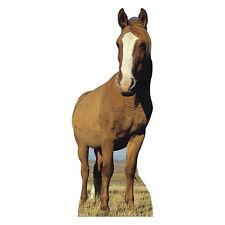 RED DUN HORSE White Blaze Lifesize CARDBOARD CUTOUT Standee Standup Poster Prop