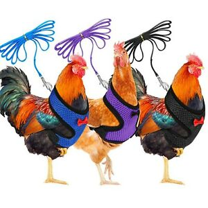 Chicken Harness Hen Size With 6-Foot Matching Belt Comfortable Breathable Small