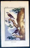 1770 Comte de Buffon Antique Ornithology Print - The Maya or The Tree Sparrow