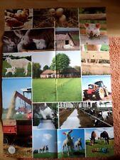 84x59 Poster Auf dem Bauernhof Schaf Hund Katze Hühner Kinder LINDANI 4-2012